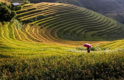 Vietnam y Camboya - Hasta Octubre
