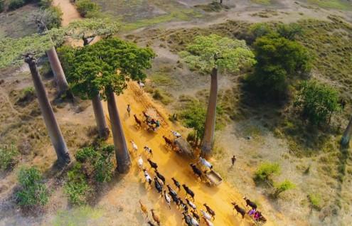 Perfume de Madagascar - Hasta Enero 2020