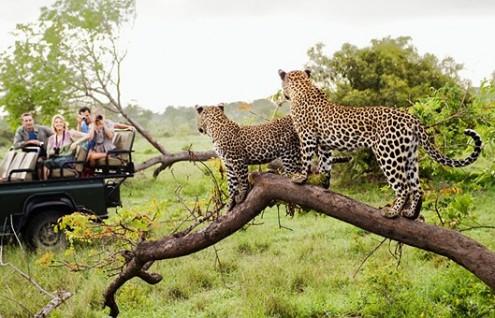 Sudafrica - Parque Kruger - Hasta Noviembre