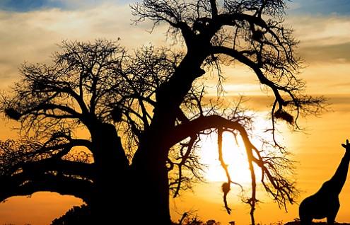 Sudafrica - Hasta Diciembre